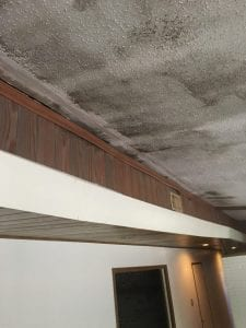 Reasons To Get A Mold Inspection